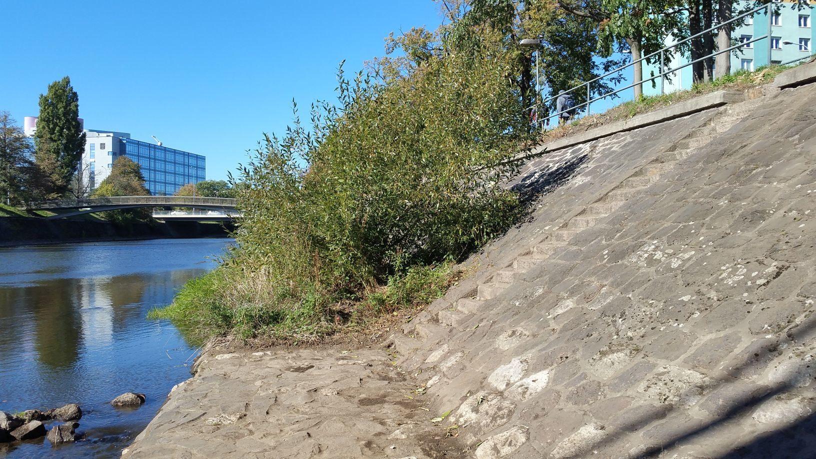Řeka Svratka u viaduktu u ulice Uhelná, nahoře za zábradlím cyklostezka.