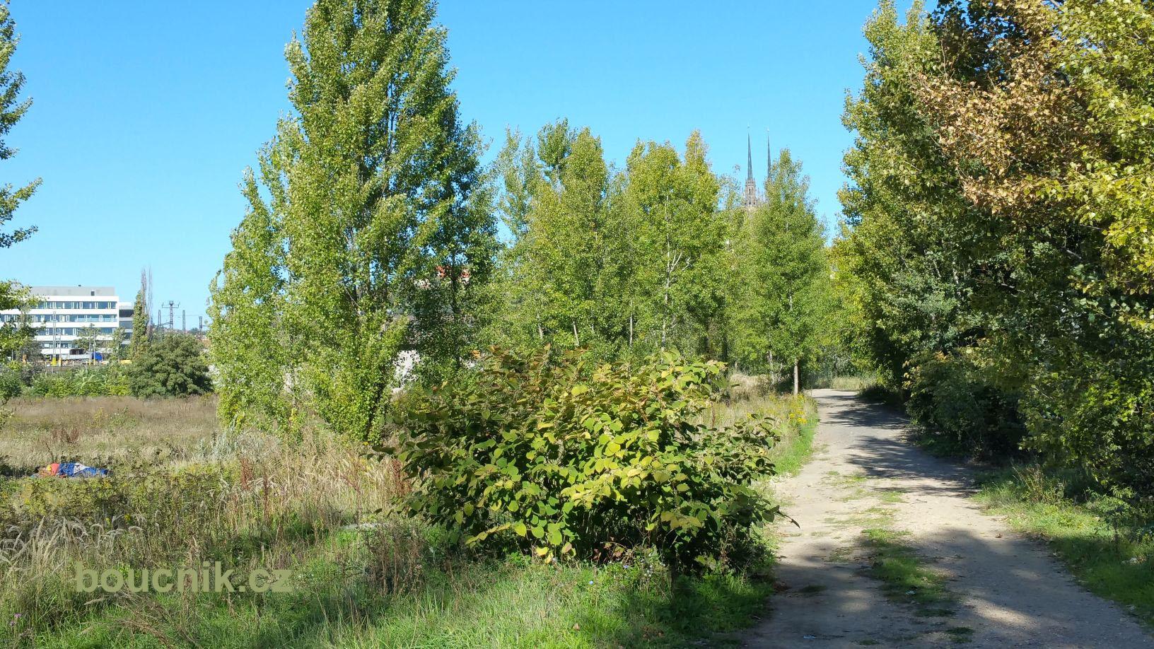 Lesní cesta v Brně-střed