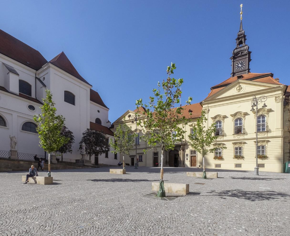 Platany na Dominikánském náměstí v Brně